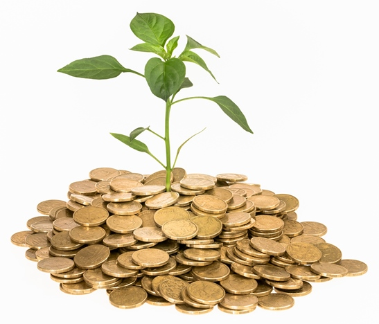 A plant surrounded by coins